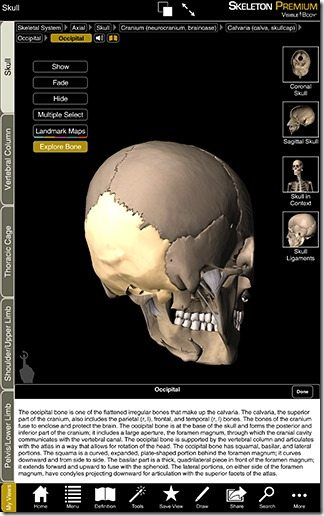 Skeleton Premium 02