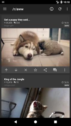 reddit is fun golden platinum